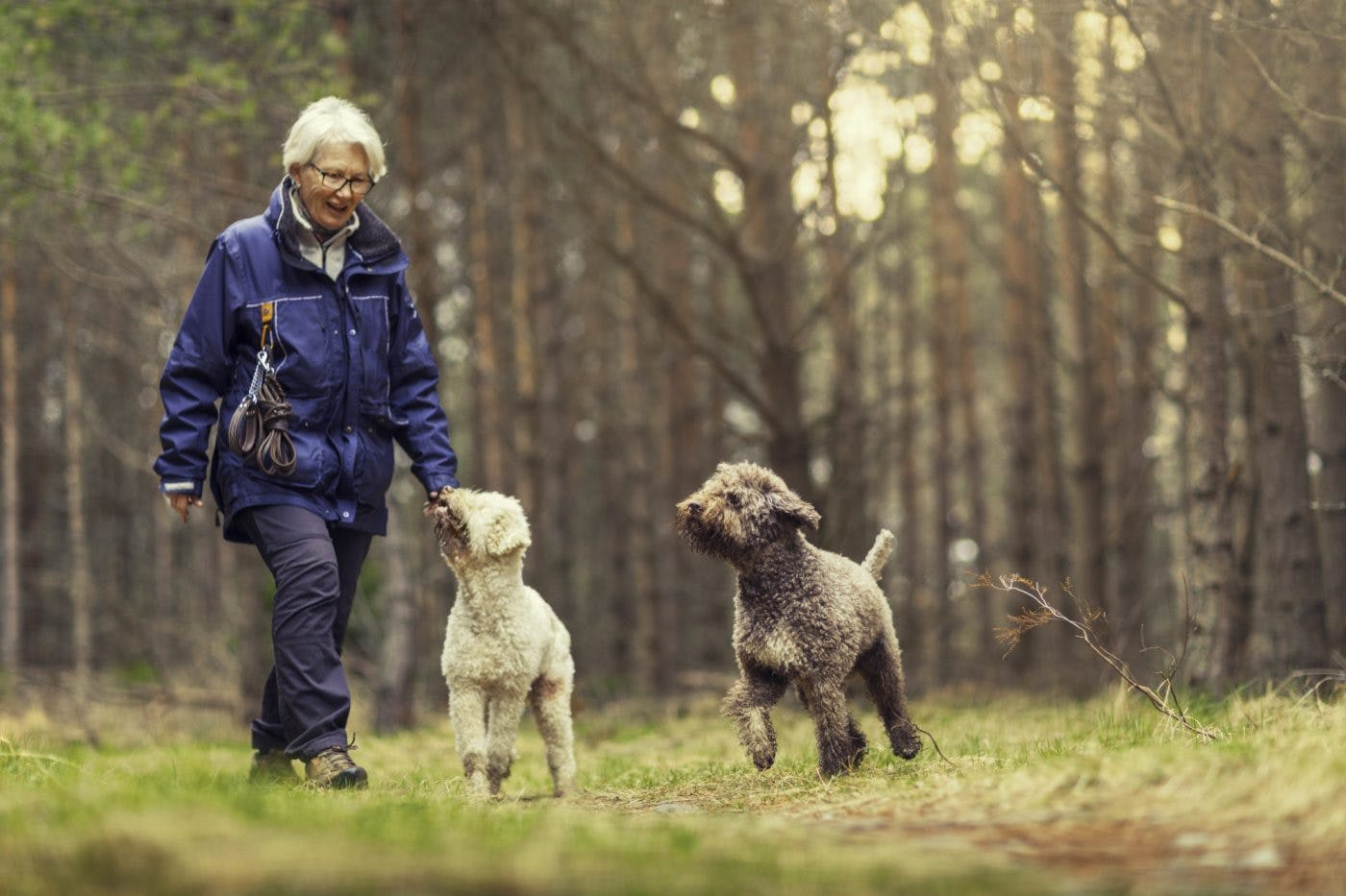 Mature Woman Walking Dogs In Woods I Stock 917158900